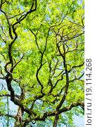 Under the tree. Стоковое фото, фотограф Alexander / easy Fotostock / Фотобанк Лори