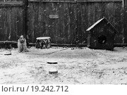 Жил-был пёс. Стоковое фото, фотограф Валентин Сорокин / Фотобанк Лори
