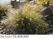 Купить «autumn fall green grass oriental», фото № 19464844, снято 20 января 2019 г. (c) PantherMedia / Фотобанк Лори