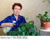 Купить «Пожилая женщина ухаживает за цветами», эксклюзивное фото № 19556952, снято 24 декабря 2015 г. (c) Вячеслав Палес / Фотобанк Лори