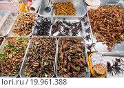 Купить «Insects exotic food», фото № 19961388, снято 16 декабря 2015 г. (c) Александр Подшивалов / Фотобанк Лори