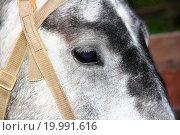 Купить «Horse head and eye», фото № 19991616, снято 23 марта 2019 г. (c) easy Fotostock / Фотобанк Лори