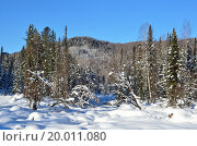 Купить «Зима, лес горного Алтая», фото № 20011080, снято 11 января 2016 г. (c) Овчинникова Ирина / Фотобанк Лори