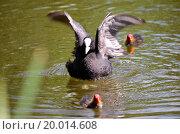 Under My Wings. Стоковое фото, фотограф Zoonar/Nils Prause / easy Fotostock / Фотобанк Лори