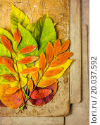 autumn leaves on a wooden surface. Стоковое фото, фотограф anelina / easy Fotostock / Фотобанк Лори