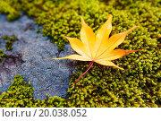 Купить «Yellow maple leaves on moss», фото № 20038052, снято 13 ноября 2012 г. (c) easy Fotostock / Фотобанк Лори