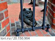 Купить «Cat of Friedrichsburg Gate. Kaliningrad, Russia», фото № 20150904, снято 19 февраля 2019 г. (c) easy Fotostock / Фотобанк Лори