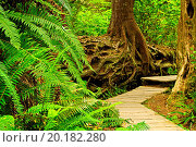 Купить «Path through temperate rain forest. Pacific Rim National Park, British Columbia Canada», фото № 20182280, снято 17 июля 2010 г. (c) easy Fotostock / Фотобанк Лори