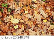 Купить «Natural background: a lot of yellow and orange dry leaves», фото № 20248748, снято 19 октября 2011 г. (c) easy Fotostock / Фотобанк Лори