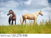 Купить «Two horses in the steppe. Colorful horizontal photo. Natural light and shadows», фото № 20279948, снято 24 августа 2010 г. (c) easy Fotostock / Фотобанк Лори