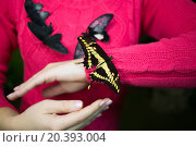 Купить «Four beautiful tropical butterflies sit on blouse and hand of woman.», фото № 20393004, снято 4 ноября 2014 г. (c) Losevsky Pavel / Фотобанк Лори