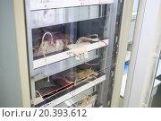 Купить «Medical fridge with packs of donated blood», фото № 20393612, снято 10 ноября 2014 г. (c) Losevsky Pavel / Фотобанк Лори