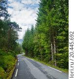 Купить «Scenic winding road through green forest in Norway», фото № 20445692, снято 16 августа 2011 г. (c) easy Fotostock / Фотобанк Лори