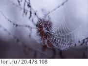 Купить «texture net cobweb dewdrop morgentau», фото № 20478108, снято 22 июля 2019 г. (c) PantherMedia / Фотобанк Лори
