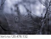 Купить «texture net cobweb dewdrop morgentau», фото № 20478132, снято 22 июля 2019 г. (c) PantherMedia / Фотобанк Лори