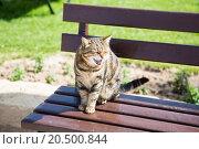 Купить «Кот на лавочке», эксклюзивное фото № 20500844, снято 7 апреля 2015 г. (c) Михаил Ворожцов / Фотобанк Лори