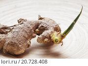 Росток имбиря. Стоковое фото, фотограф Виктор Колдунов / Фотобанк Лори