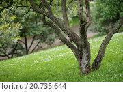 Дерево в парке. Стоковое фото, фотограф Ольга Галахова / Фотобанк Лори