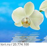 Белая орхидея. Стоковое фото, фотограф Нефедьев Леонид / Фотобанк Лори