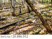 Купить «Schoeneberger Suedgelaende Nature Park», фото № 20886912, снято 22 мая 2019 г. (c) PantherMedia / Фотобанк Лори