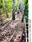 Купить «Schoeneberger Suedgelaende Nature Park», фото № 20886940, снято 22 мая 2019 г. (c) PantherMedia / Фотобанк Лори