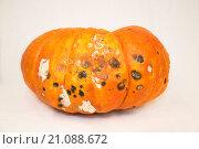 Гнилая тыква rotten pumpkin. Стоковое фото, фотограф Алла Черкасова / Фотобанк Лори