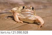 Жаба на бревне. Стоковое фото, фотограф Анастасия Колганова / Фотобанк Лори