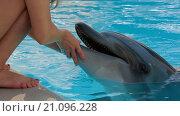 Купить «Девочка гладит дельфина», видеоролик № 21096228, снято 29 сентября 2015 г. (c) Tatiana Kravchenko / Фотобанк Лори