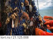 Купить «Dutch fishing vessel fishing on the Northies for sole and flounder.», фото № 21125008, снято 3 сентября 2015 г. (c) age Fotostock / Фотобанк Лори