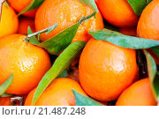 Купить «Closeup background of fresh tangerines or clementines displayed for retail in a farmers market or supermarket with their green leaves, a healthy dessert snack and source of vitamin C», фото № 21487248, снято 28 января 2014 г. (c) easy Fotostock / Фотобанк Лори