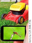 Купить «tourist photographs of red dragonfly», фото № 21598116, снято 25 мая 2018 г. (c) easy Fotostock / Фотобанк Лори