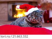 Купить «Gray Cat with Santa hat and a fireplace.», фото № 21663332, снято 26 июня 2019 г. (c) PantherMedia / Фотобанк Лори
