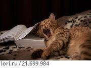 Тяжелая литература. Стоковое фото, фотограф Татьяна Карабицина / Фотобанк Лори