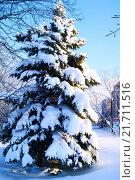 Ель под снегом. Стоковое фото, фотограф Sergey  Ivanov / Фотобанк Лори