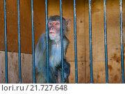 Обезьяна в клетке зоопарка. Стоковое фото, фотограф Юрий Волобуев / Фотобанк Лори