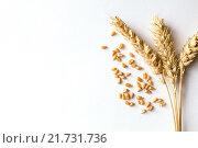 Купить «Золотые пшеничные колоски», фото № 21731736, снято 4 февраля 2016 г. (c) Инга Макеева / Фотобанк Лори