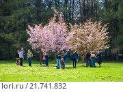 Купить «Люди около цветущих деревьев сакуры», фото № 21741832, снято 30 апреля 2012 г. (c) Алёшина Оксана / Фотобанк Лори