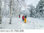 Группа людей путешествует по зимнему лесу. Стоковое фото, фотограф Олег Вдовин / Фотобанк Лори