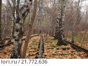 Купить «Berlin, Germany, old railway tracks in the nature park Schoeneberger Südgelände», фото № 21772636, снято 18 ноября 2012 г. (c) Caro Photoagency / Фотобанк Лори