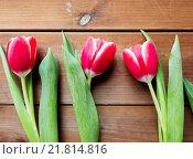 Купить «close up of red tulip flowers on wooden table», фото № 21814816, снято 28 января 2016 г. (c) Syda Productions / Фотобанк Лори