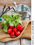 Купить «Fresh radishes from ground on old wooden table», фото № 21834908, снято 23 января 2019 г. (c) BE&W Photo / Фотобанк Лори