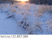Лесная река трава  береговой линии под снегом на рассвете. Стоковое фото, фотограф Сергей Кудрявцев / Фотобанк Лори