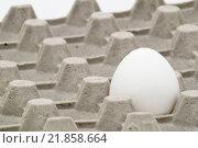 Одно белое яйцо в картонной ячейке. Стоковое фото, фотограф Максим Алакин / Фотобанк Лори
