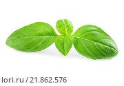 Купить «Листья зеленого базилика», фото № 21862576, снято 11 сентября 2014 г. (c) Кропотов Лев / Фотобанк Лори
