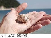 Купить «Морские ракушки на ладони», фото № 21863468, снято 29 июня 2014 г. (c) Женя Ивина / Фотобанк Лори