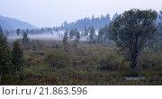 Дымка в лесу, Иркутский р-н, Байкальский тракт, 25 км. Стоковое фото, фотограф Константин Мезенцев / Фотобанк Лори