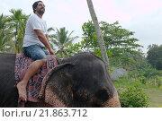 Купить «Мужчина едет на индийском слоне, Hikkaduwa, Шри-Ланка, Южная Азия», фото № 21863712, снято 14 декабря 2018 г. (c) Некрасов Андрей / Фотобанк Лори