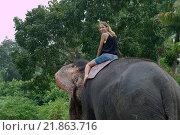 Женщина едет на индийском слоне через джунгли, Шри-Ланка, Южная Азия. Стоковое фото, фотограф Некрасов Андрей / Фотобанк Лори
