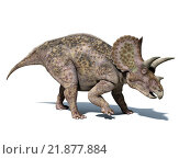Купить «Triceratops dinosaur, isolated on white background, with clipping path..», иллюстрация № 21877884 (c) PantherMedia / Фотобанк Лори
