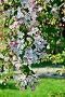 Весенний фон. Цветущая яблоня, фото № 21890856, снято 28 апреля 2014 г. (c) Сергей Трофименко / Фотобанк Лори
